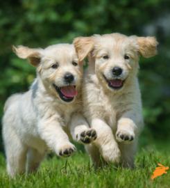 Dotsure Pet Insurance