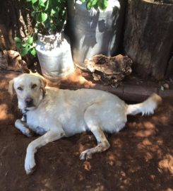 Unleashed – companion animal behaviourist
