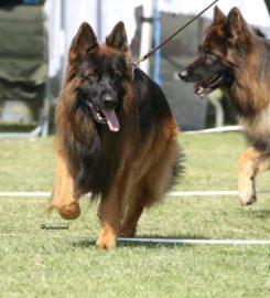 Algoa Bay German Shepherd Dog Club