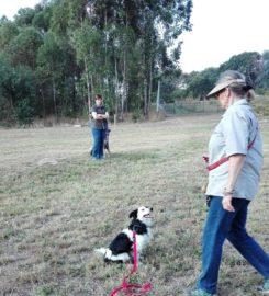 Lowveld Dog Training